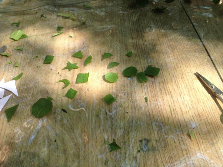honeysuckle leaf shapes